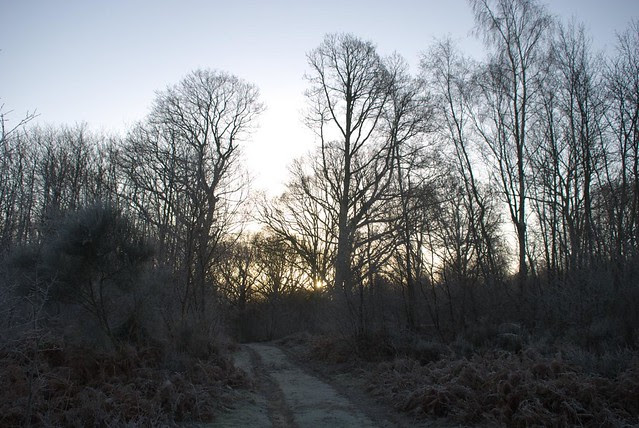 frosty woodland morning DSC_2576