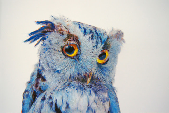 Owl Drawing Color The Expert