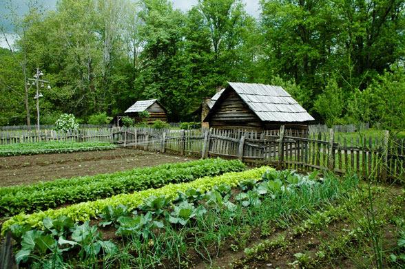 Zelenjavni vrt