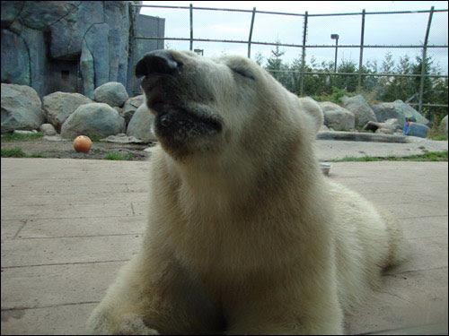 Hudson, Toronto Zoo, September 30