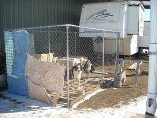 Border Collies Brodey and Nessa in Kennel Under Barn Lean-to