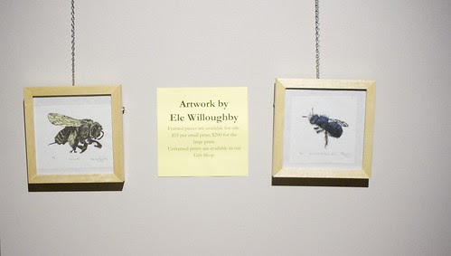 Bee biodiversity exhibit