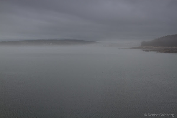 schoodic peninsula, acadia national park, fog
