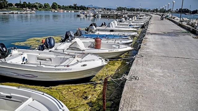 Πρέβεζα: «Πράσινη παλίρροια» από φύκια κατέκλυσε το λιμάνι. Δείτε φωτογραφίες