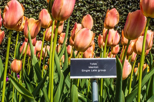 Botanic Gardens - Dublin by infomatique