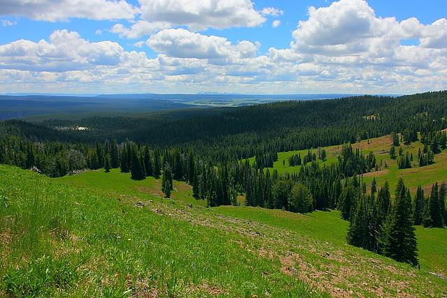 IMG_3105 Mount Washburn Trail
