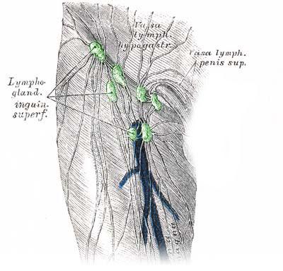 Erbsengroße Lymphknoten Im Nacken Cyberdoktor Patientenberatung