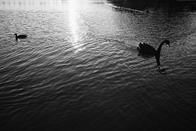 The Ducks - My Way