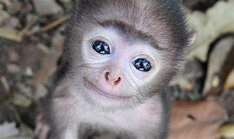 bayi monyet  imut  suka narsis pojok pulsa