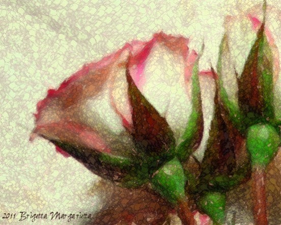 Touched by Scarlet White Rose Fine Art Photograph Pink Brown Green Mosaic Stained Glass