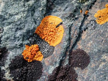 <p>Líquenes antárticos (<em>U</em><em>Xanthoria sp</em>y<em>Caloplaca sp</em>) en los alrededores de la base española Juan Carlos I. / Fernando Valladares</p>