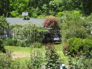 Nick's Garden