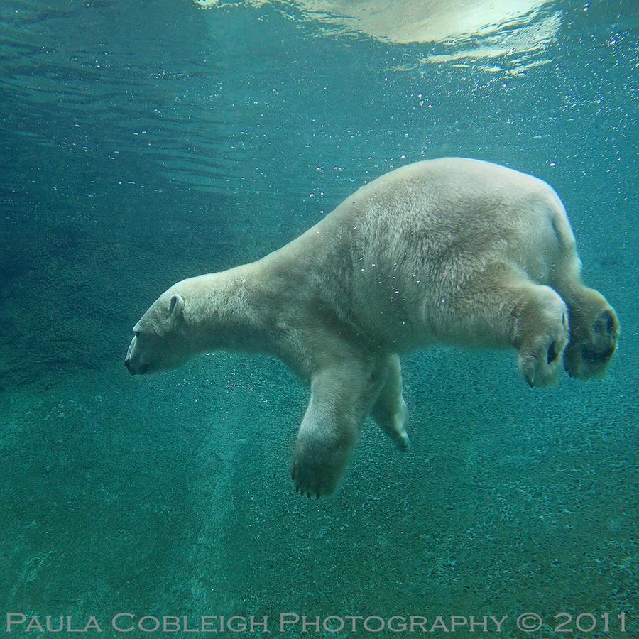 Weightless Polar Bear by La-Vita-a-Bella