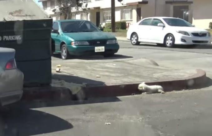Una perrita agonizó junto a un basurero por horas hasta que finalmente alguien se apiadó de ella