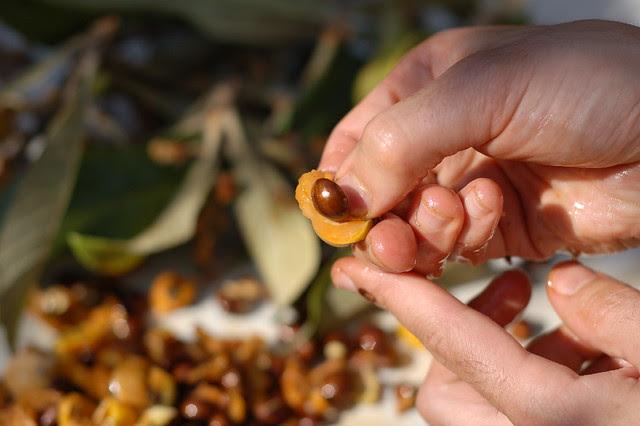 Loquat seed