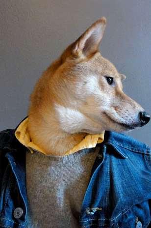 Diz-se que o cachorro, no entanto, faz mais sucesso entre o público feminino Foto: Mensweardog.tumblr.com / Reprodução