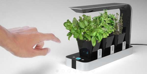 HiTech Countertop Planters : BB Little Garden
