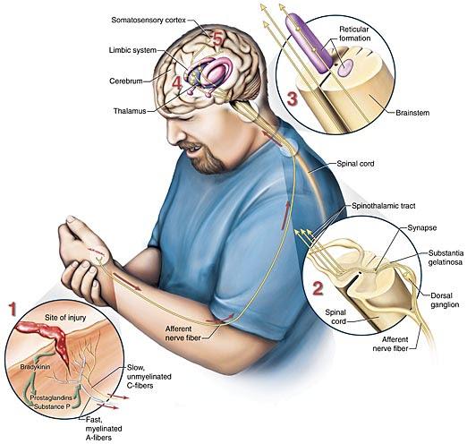 Nursing Assessment for Pain