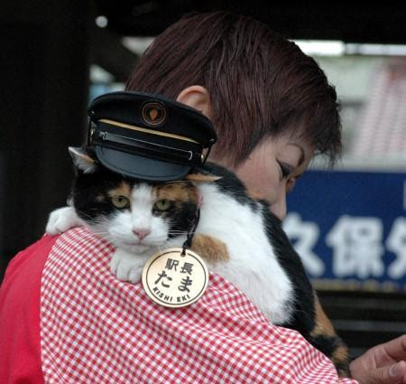 Tama the Station Master Cat - I can haz Oystercard