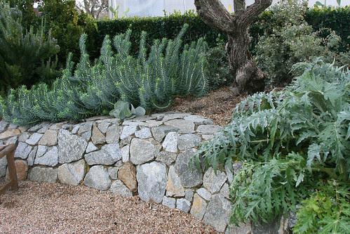 stone, gravel, grey plants