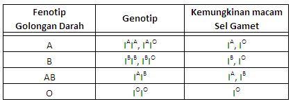 Hubungan Fenotip, Genotip, dan Kemungkinan jenis sel Gamet