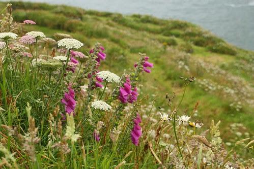 Wildflowers at Tintagel
