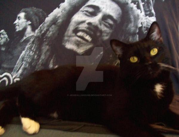 Cat and Bob Marley by JesseAllshouse on DeviantArt