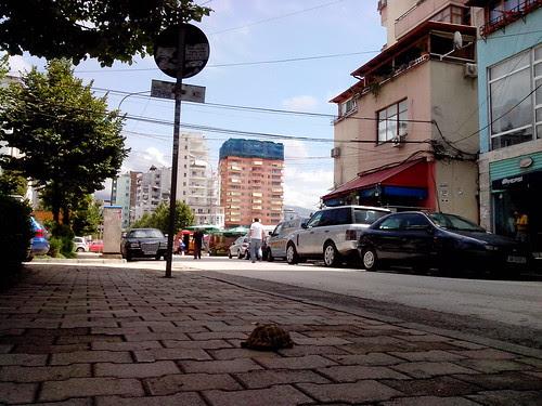 Una tartaruga in città by Ylbert Durishti