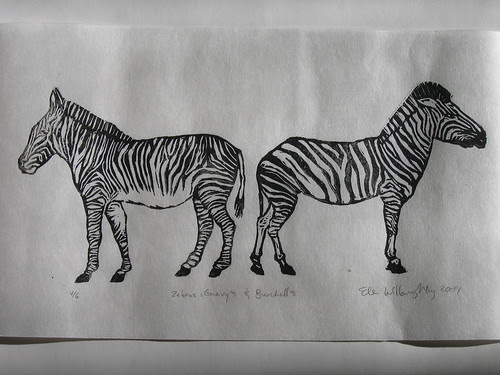 Zebras: Chevy's & Burchell's