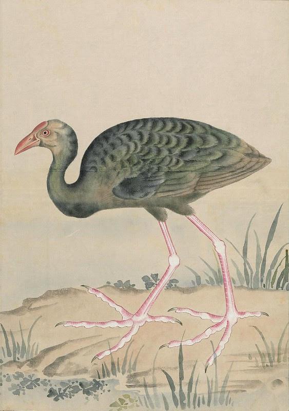 Ink + Watercolour  Bird sketch s