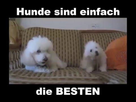 Hunde Sind Einfach Die Besten Lustige Bilder Sprüche Witze