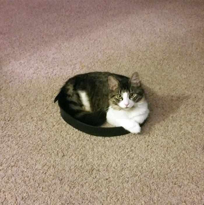 gato11
