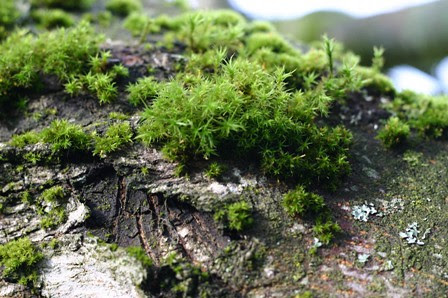 mossy 2