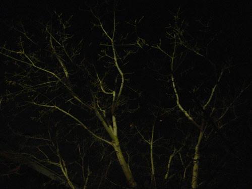 Trees at Night _ 9268