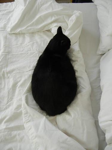 Cat _ 3996