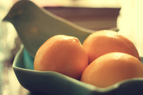 meyers lemons and bird