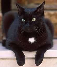 """<B>Non dire """"gatto""""<br>se non l'hai nel libro</B>"""