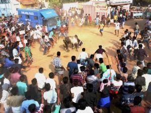 Jallikattu: Tamil Nadu reels under protests; CM knocks PM