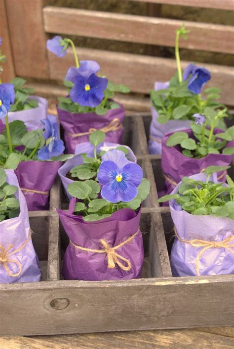 Small potted plant Party Favors / mothers day gifts