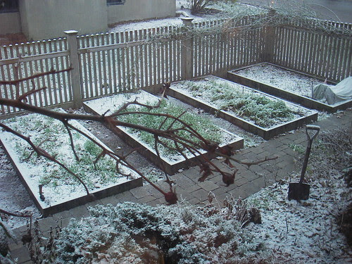 first snow on the vegetable garden