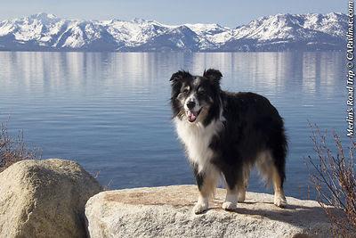 Lake Tahoe Merlin