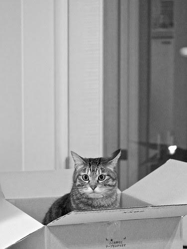 猫はAmazonが好き