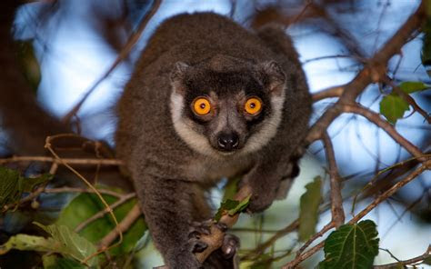 lemur  madagascar wallpaper hd wallpaperscom