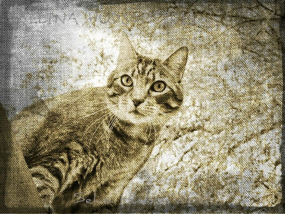 Old looking Kitty photo - 8 x 10 frame Print Art Photography