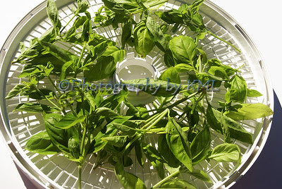 basil on a drying tray