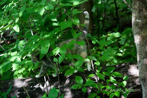 Possum Takes a Hike.jpg