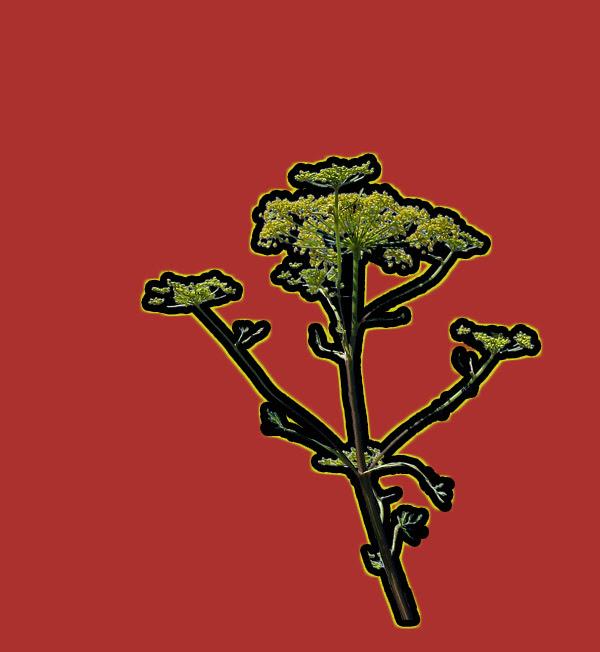 Röd-hundkex