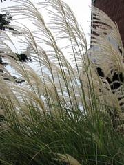 Mom's fluffy grass