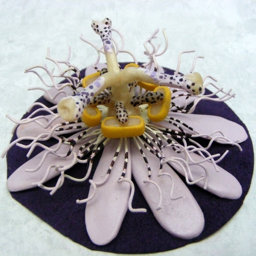 Passion Flower for Deb