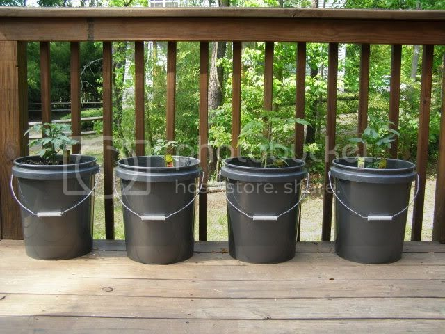 annies home Bucket Gardening Saves Money and Space